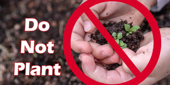Do not plant unsolicited seeds received in the mail from China