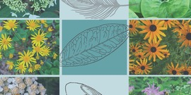 Habitat landscaping