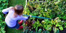 """Image used in past """"Spring into Gardening"""" programs"""