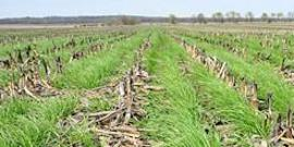 Soil health 2