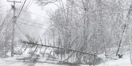 Storm damaged tree 2018