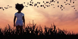 child in silhouette in corn field watching geese fly at sunset