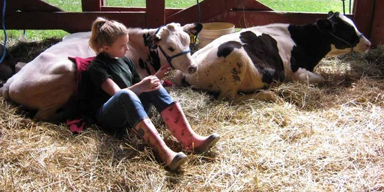 Rachel Cartner with her cows at the 4-H Fair, 2013