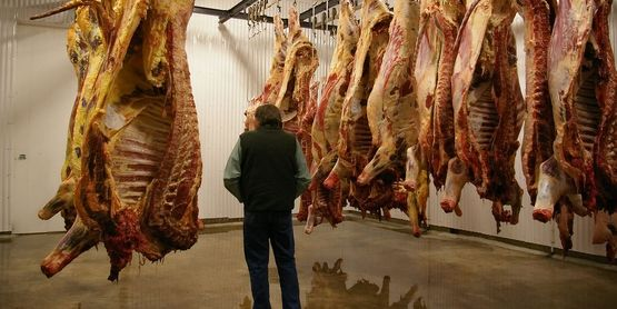 Meat hanging in the first cooler room of the processing facility. Freshly slaughtered animals are on the left, day-old animals on the right.  Source: Wikipedia
