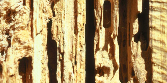 Wood Damage