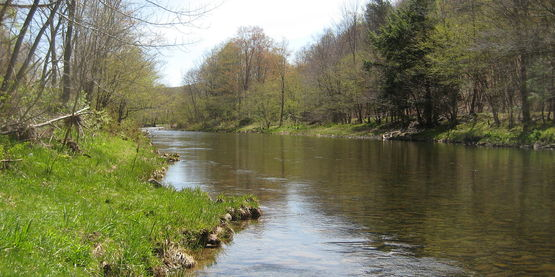 Willowemoc Creek, east of Livingston Manor, Rockland County