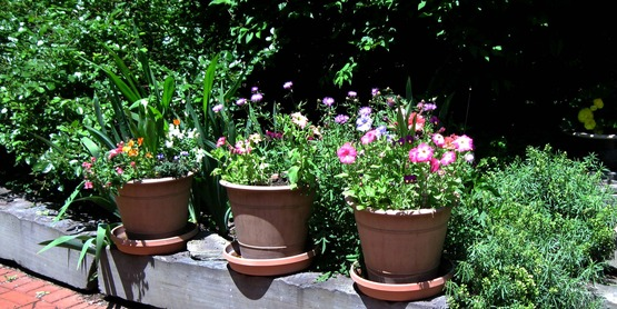 Pots of flowers on a driveway curb, taken in Lansing, NY on the 2013 Open Days Garden Tour