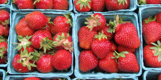 Strawberries are a June u-pick crop in the Finger Lakes.