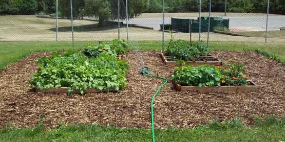 Community Garden- Youth Center, Batavia NY