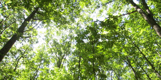 Tioga County's abundant forest cover provides fuel, timber and other resources to property owners.
