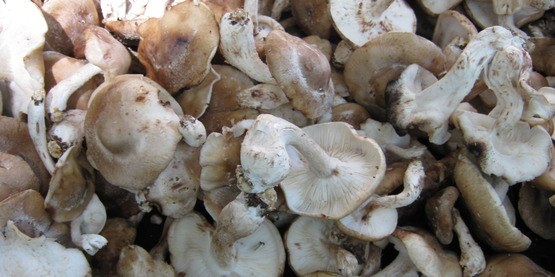 Mushroom cultivation is a great way to maximize your forest's potential.