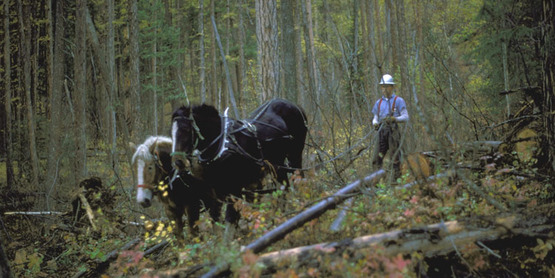 Harvesting timber from a forest
