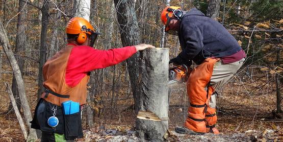 Logger Training. Cutting logs.
