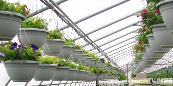 ornamental horticulture...