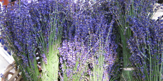bunches of dried lavender for sale at an NYC farmers' market