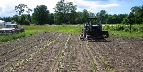 Planting Brussel sprouts at Stick & Stone Farm (Ulysses, NY).