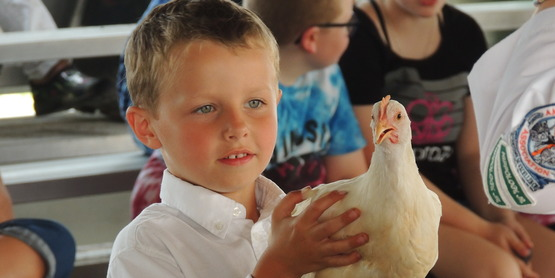 A 4-H member with his bird during the Hemlock Fair.