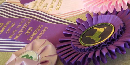 goat show winning ribbons, 4-H Fair