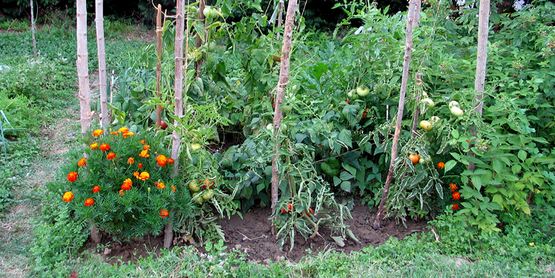 Home vegetable garden