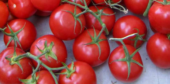 vine ripened tomatoes in a farmers' market in NYC, July 2014