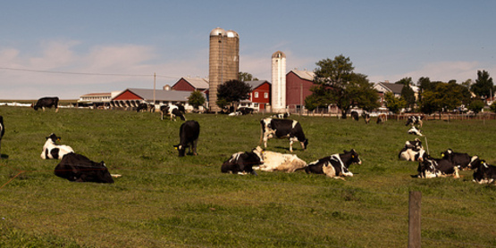2017 Central New York Dairy Day