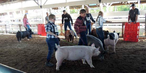 Swine Show participants at the Hemlock Fair.