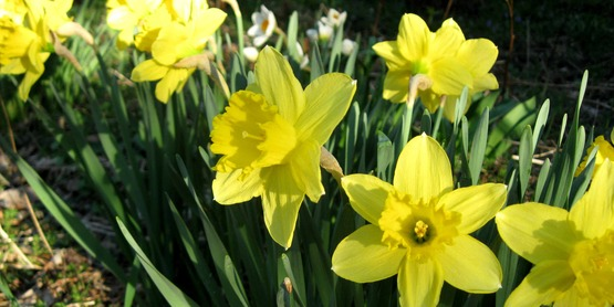 September is a good time to buy and plant flowering spring bulbs.