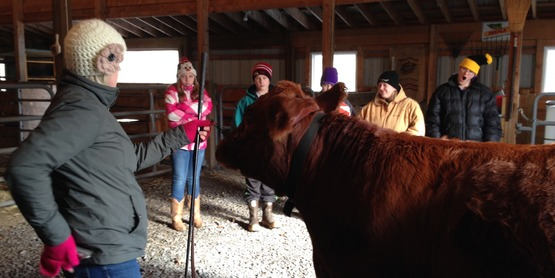 4-H Beef Workshop