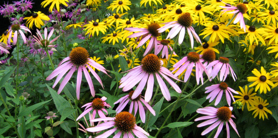 Native plants are beautiful and provide food and nectar for birds and butterflies.
