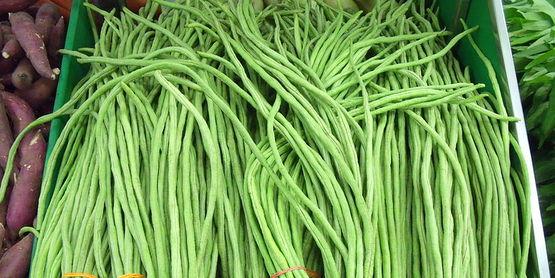 long beans Fabacea family Vigna unguiculata