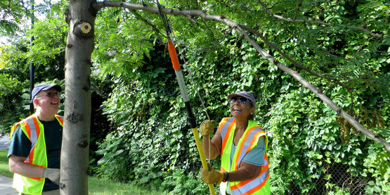 CommuniTree Stewards enjoy a summer morning pruning at the Inner Harbor