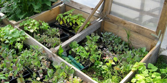 Cold frames are a great way to extend your growing season.
