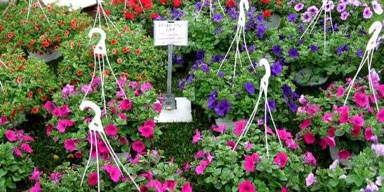 Master Gardener Annual Plant Sale