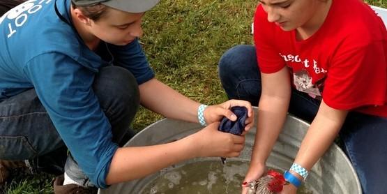 4-H Kids washing a chicken.