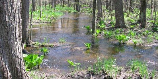 Floodplain forest/wetland