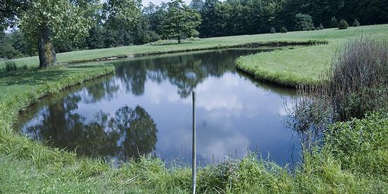 Shovel and Pond