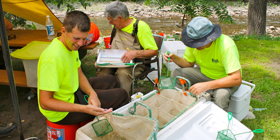 Researchers examine fish community health in the upper Esopus Creek.
