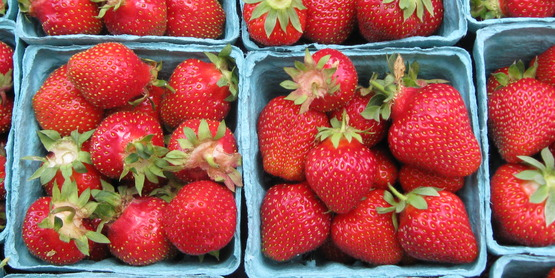 Strawberries are a June u-pick crop in our region.