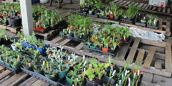 Plants donated by Master Gardeners that remained unsold after 2019 plant sale