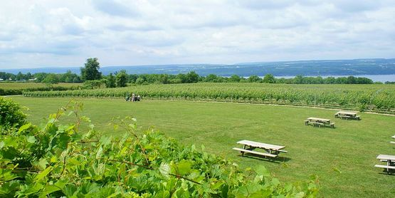 Vineyards by Seneca Lake, viewed from the back porch of Wagner Vineyards