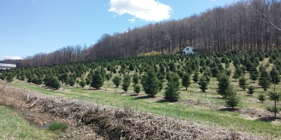 Abel's Tree Farm in Union Vale