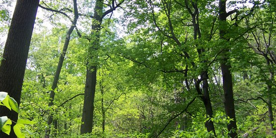 We offer resources to help you protect and manage your woodlands.