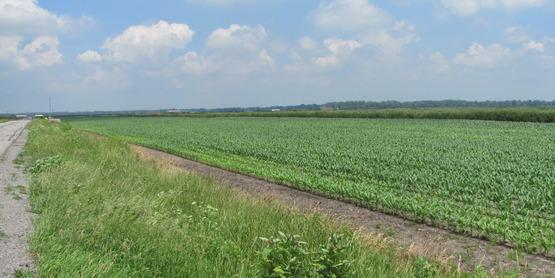 Genesee County field