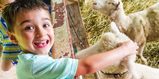 Meeting the Sheep at Farm Day Camp