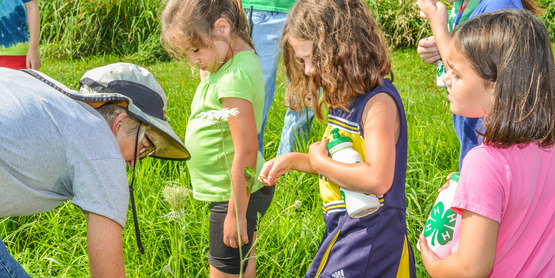 Learning about the plants in the sheep pastures at Farm Day Camp