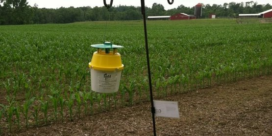 Integrated Pest Management Trap for Western Bean Cutworm, Dutchess County, NY