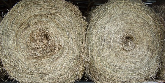 Stored round bales of hay, Dutchess County, NY