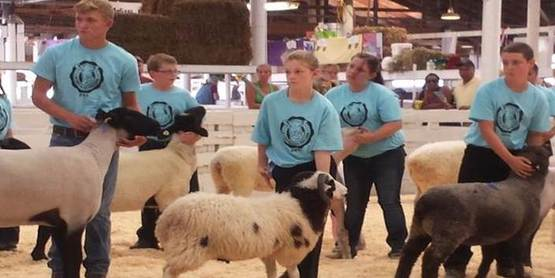 State sheep show