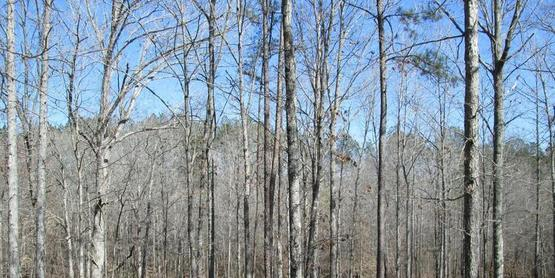 Woodlots can produce many benefits for the landowner.