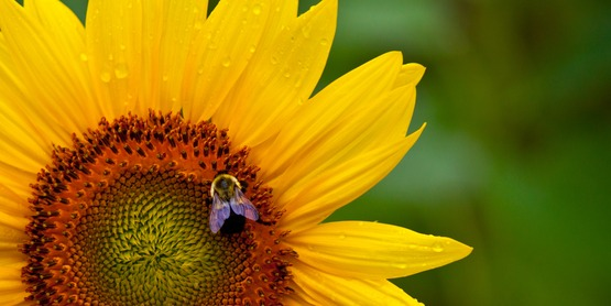 Pollinators,like bees, birds, & bats play a crucial role in flowering plant reproduction